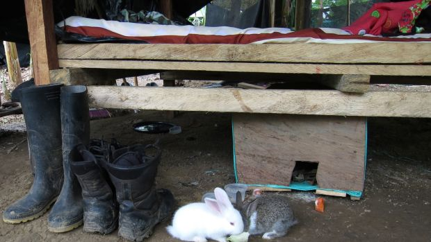 Pet rabbits alongside military boots at the bottom of a Farc guerrilla's bunk at the 57th Front's demobilisation camp in Chocó, Colombia. Photograph: David McKechnie
