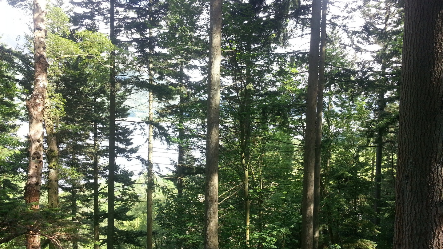 continuous cover a new approach to irish forestry