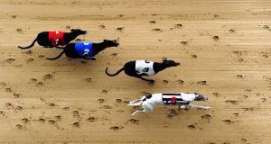 The GRAI told members that Ireland needs a tracking database for greyhounds so that all deaths and changes of ownership will have to be accounted for. Photograph: Jamie McDonald/Getty Images