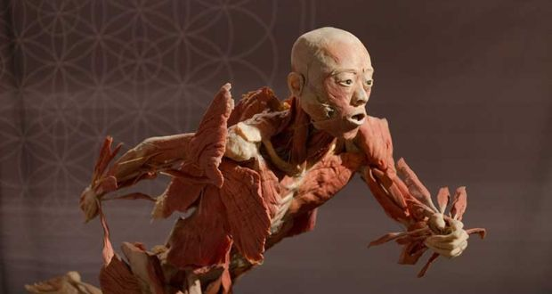 A slice of death changing attitudes to putting corpses on display modern exhibitions of human bodies have been accused of using chinese criminals in a striking parallel publicscrutiny Images