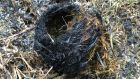 A bird's nest burned in a gorse fire in Coumkeen near Bantry, Co Cork. Photograph: BirdWatch Ireland