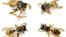Squash them or accept them? Life lessons from angry wasps