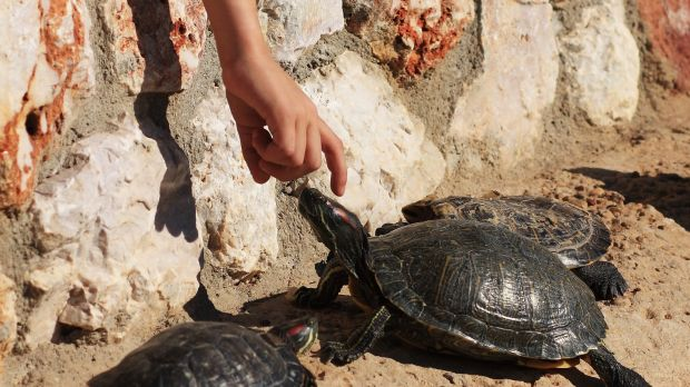 Families can take part in programmes to protect turtles in Greece