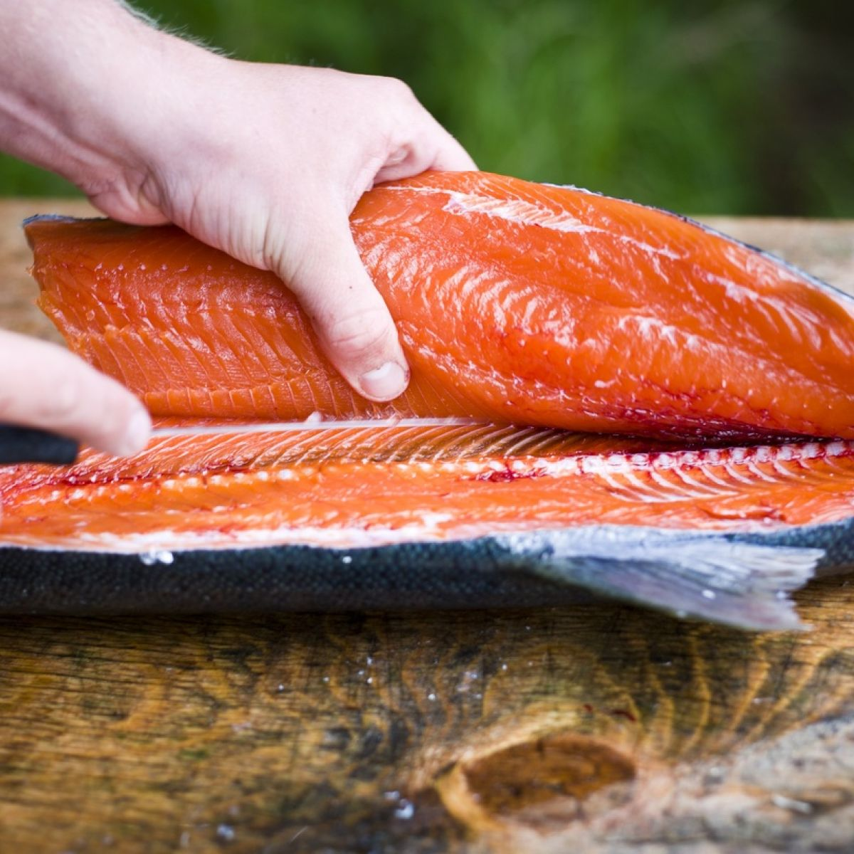 How useful is the salmon