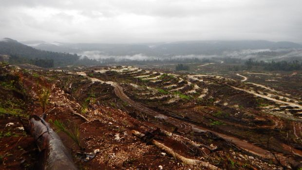 Landscape devastated by industrial logging in Papua New Guinea. Photograph: Global Witness