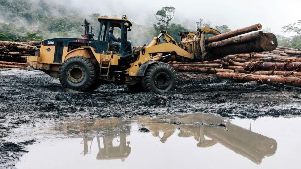Environmental degradation caused by industrial logging in Malaysia. Photograph: Global Witness