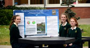 Balbriggan Loreto students Cleo Gallen, Enya Andersen and Kirsty Burns: tackling the seagull problem. Photograph: Cyril Byrne