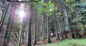 Coillte  is targeting operational cashflow of more than €60 million by 2019