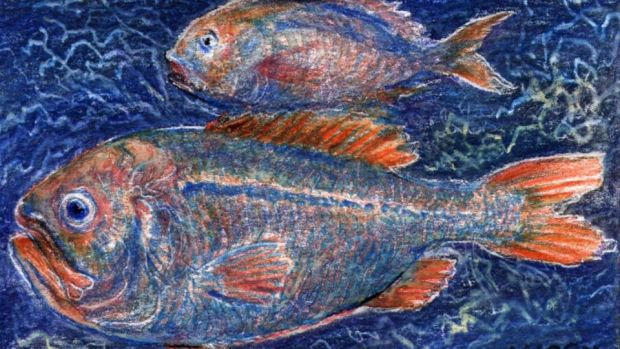 Fish also have cone cells for colour and UV vision, and bigger eyes, to gather more light, the deeper and darker they live. Drawing – Michael Viney.