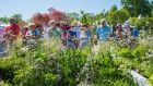 Garden enthusiasts at Bloom in 2016. Photograph: Brenda Fitzsimons
