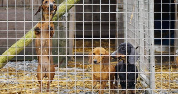 Ireland is 'puppy farm capital' of Europe