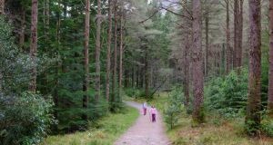 A forest in Kerry. Irish specialist software developer Treemetrics has won a €1.2 million contract from the European Space Agency to provide a system for tracking tree and forest growth.