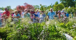 Bloom 2017 Here S Everything You Need To Know