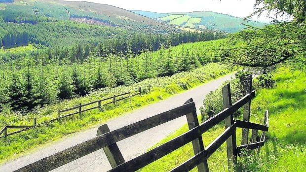 Sitka spruce and lodgepole pine dominate most of the coniferous woodlands of the Slieve Blooms, the largest cover of forestry in Ireland
