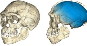 Two views of a composite reconstruction of the earliest known Homo sapiens fossils from Jebel Irhoud in Morocco, based on micro computed tomographic scans of multiple original fossils, are shown in this undated handout photo. Image:  MPI EVA Leipzig/Handout via REUTERS