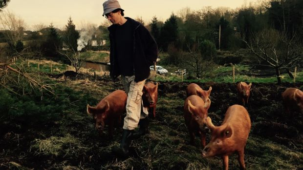 Manchán Magan with his pigs
