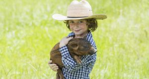 Amont the topics on the higher level paper were one about a young boy who wins a pig at a festival. Photograph: iStock
