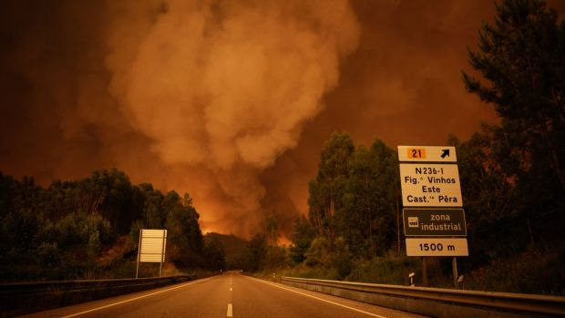 Forest fires kill 39 in Portugal