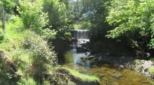 Walk for the Weekend: A gentle ramble in the Slieve Blooms