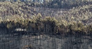 Burned trees in the aftermath of a forest fire near the Mosteiro village, Pedrogao Grande, Portugal, pictured on June 21st. Photograph: Paulo Cunha/EPA
