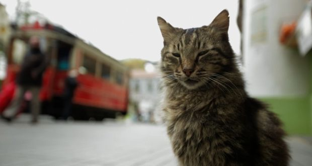 'Kedi', directed by Ceyda Torun, is an extraordinary portrait of a city, its cats and the community that loves and cares for them