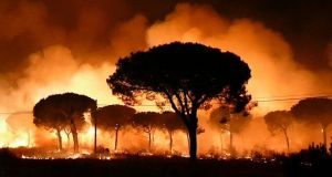 Spanish forest fire: flames rage through woodland in La Peñuela, in Huelva province. Photograph. EFE TV/EPA