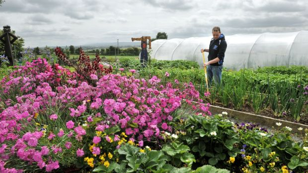 Community volunteer Pat Lynch tending the community allotments in Kildorrery, Co Cork. Photograph: Daragh Mc Sweeney/Provision