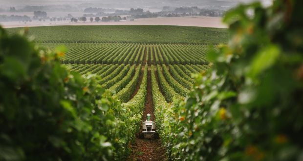 Bob The Vineyard Robot Operating In Maraichage Near Carcassonne France