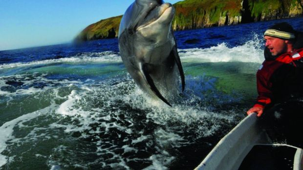 Fungi the dolphin brought a whole new generation to the Kerry coastline.