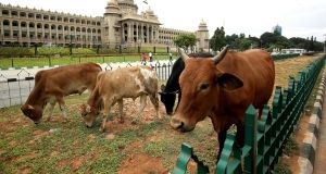 Stray cattle   in front of the state legislature of Karnataka in Bengaluru, India, on July 4th. Photograph: Jagadeesh NV/EPA