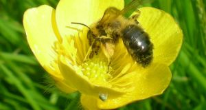The majority of the flowering plants use pollinators – such as bees – instead of wind to transport their pollen