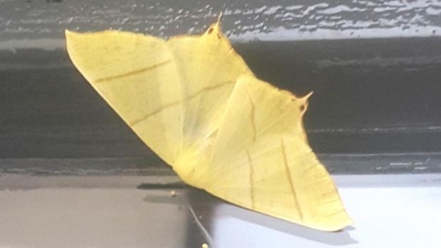 Eyes on nature: the swallow-tailed moth that Liz Owen Carney photographed