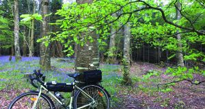 The Bluebell Wood at Emo Court, Co Laois. Photograph from Cycling South Leinster: Great Road Routes by Turlough O'Brien