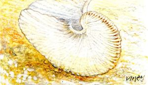 Paper nautilus: a glossy white fan of a shell, so fragile that the sun infused it, gleaming through every tight fold. Illustration: Michael Viney