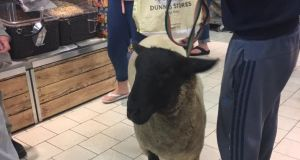 A man brought a sheep on a leash into an Antrim supermarket on Saturday.