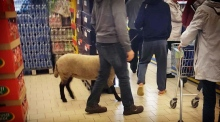 Man walks into supermarket with sheep on a leash