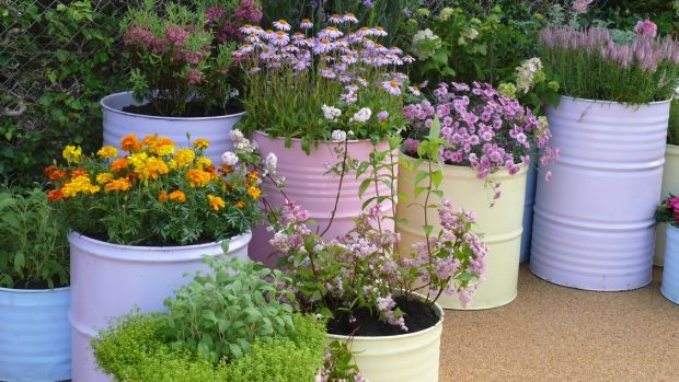 Oil drums cut to different depths and then painted are another way to pot your garden.