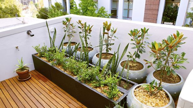 A classic potted balcony garden.