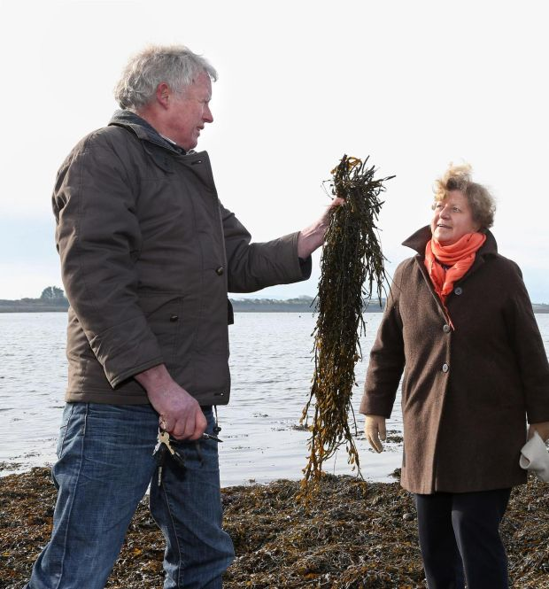 Kelp harvester John Bhaba Jeaic Ó Conghaile and Dr Rebecca Metzner, chief of the Fisheries and Aquaculture Department at the United Nations Food and Agriculture Organisation, at Rinville, Oranmore, Co Galway, in 2016. Photograph: Joe O'Shaughnessy