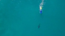 Shark fighting pro surfer has another close encounter with great white