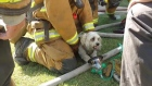 Fire fighters revive small dog after house fire