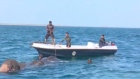 Don't forget your trunks: wild elephants rescued at sea in Sri Lanka