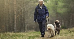 Age Action said it would welcome dog walking community schemes in Ireland. Photograph: IStock