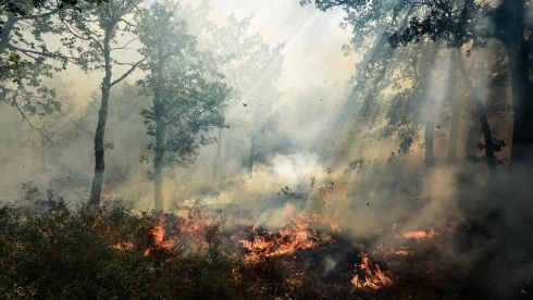 FRENCH FIRE: A fire in Artigues, one of many that have consumed swathes of land in southeastern France. Photograph: Anne-Christine Poujoulat/AFP/Getty Images