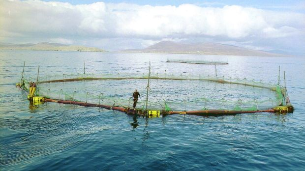 Sea farm in Clew Bay, Co Mayo. Photograph: Liam Lyons