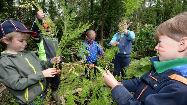 Children checking out the plants at Turvey Nature Reserve. Photograph: Alan