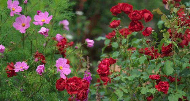 different colours in the garden will lift or lower your mood