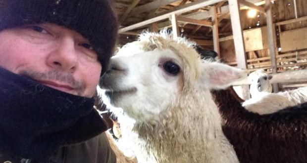 I never would have believed id end up alpaca farming in canada art director and alpaca farmer mark smullen in ontario canada solutioingenieria