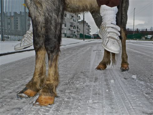 "Six Feet - ""There is something almost biblical about this image taken at O'Devaney Gardens during the record-breaking cold snap of winter 2009/10 - like a mule carrying a heavily pregnant Mary to Bethlehem or Jesus to Jerusalem on Palm Sunday. """