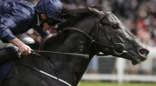 Ryan Moore riding Caravaggio win The Commonwealth Cup at Royal Ascot in June. Photograph:  Alan Crowhurst/Getty Images